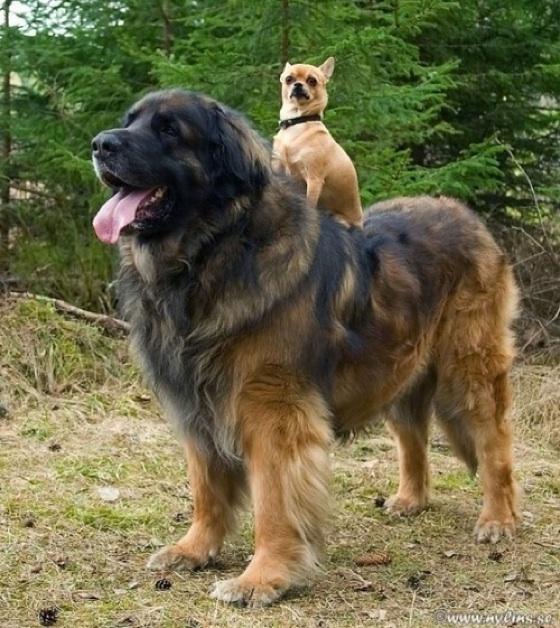 Essay on a pet dog